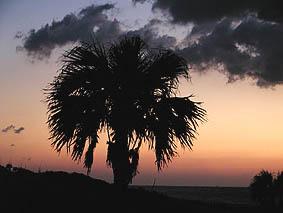 サンセットパームラインで夕闇迫る空を撮影。