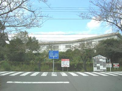 桜並木T字路
