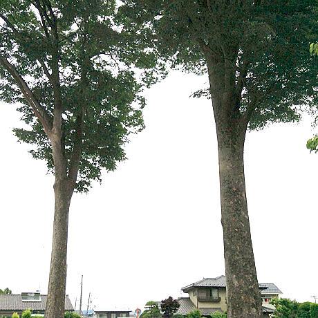 太田市の住宅