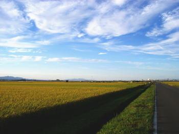 秋晴れの田園風景