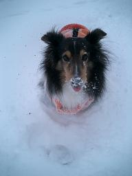 snow jesica4