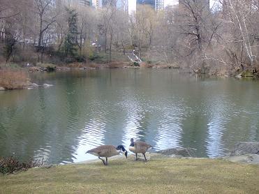 central park3/31