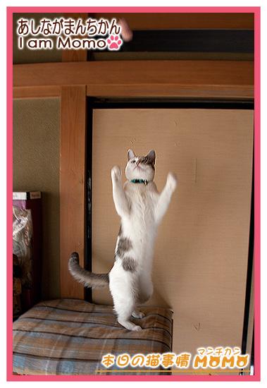 おもしろ猫写真 2本足で立つ猫
