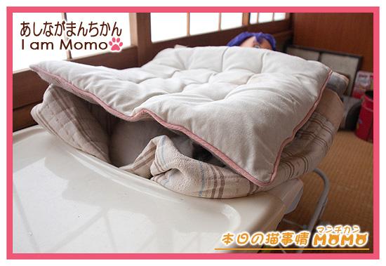 布団で蓋されて寝ている猫