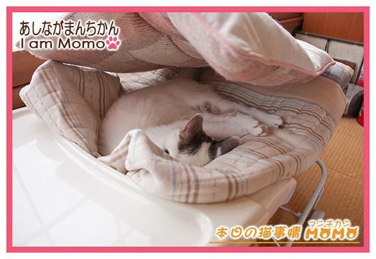 ベビーラックで寝ている猫ちゃん,足長マンチカン,ももちゃん