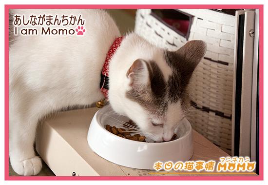 食事,猫マンチカンももちゃん1404231