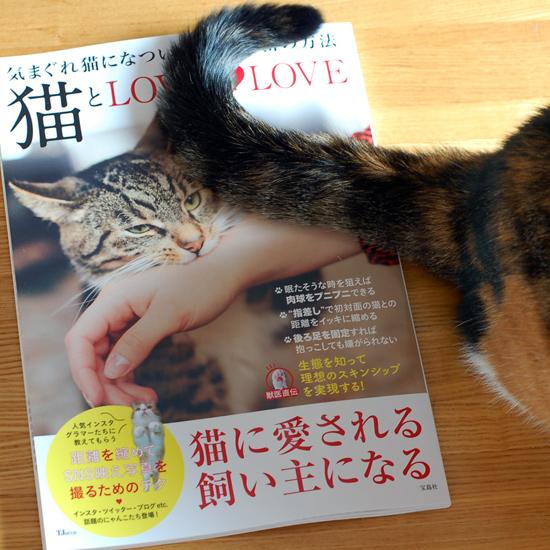 猫とLOVELOVE