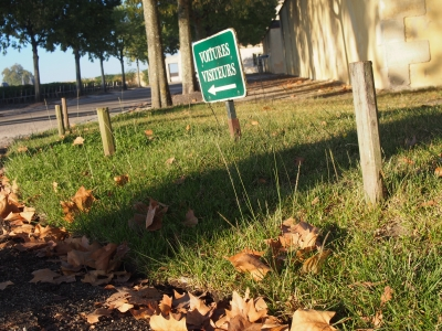 秋の落ち葉ボルドー