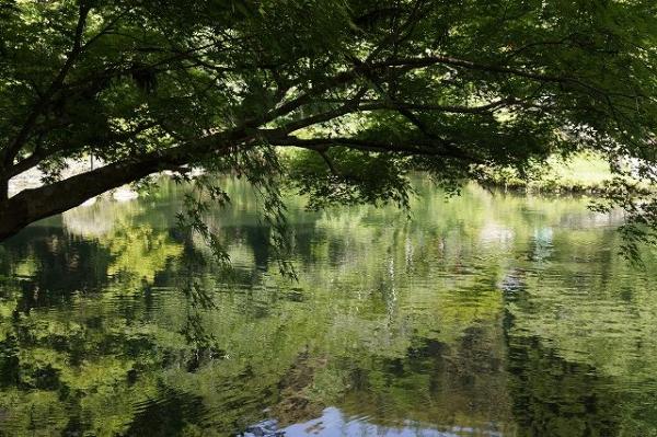 小野泉水公園池のほとり