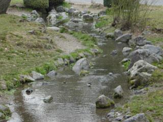 京都御所の小川