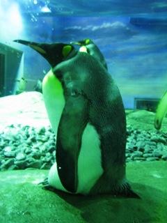 ふとっちょペンギン