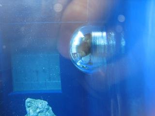 球体ガラス
