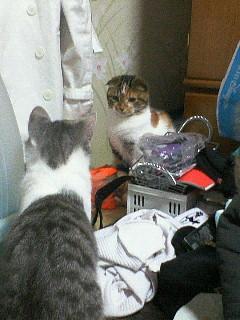 猫だってきっと汚い部屋が好きなんだよ!