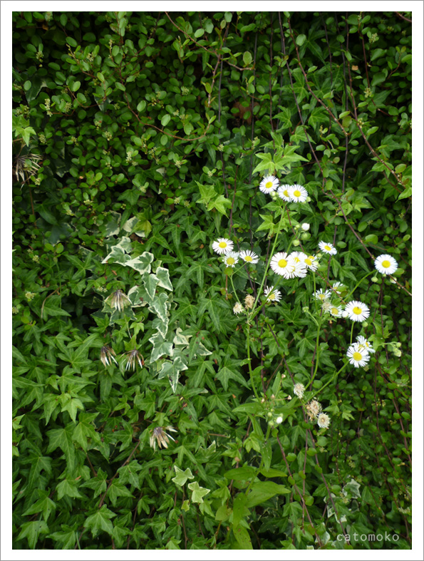 ヨシタベーカリーのお庭