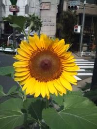 chihara120807.jpg