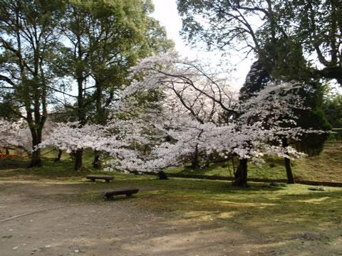姫路城保存樹