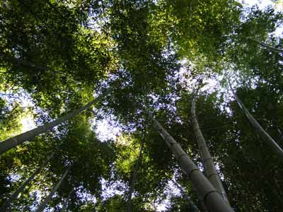 竹林パワー