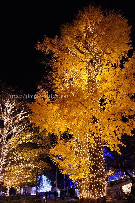 東京ミッドタウンでイルミに照らされたイチョウの木