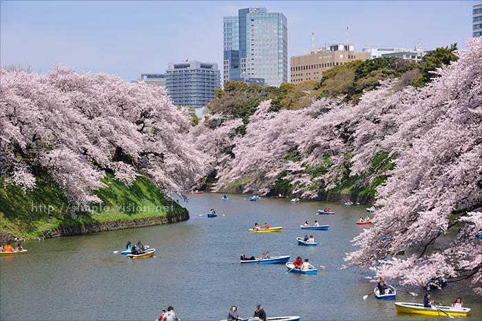 千鳥ヶ淵の桜とボート(望遠撮影)