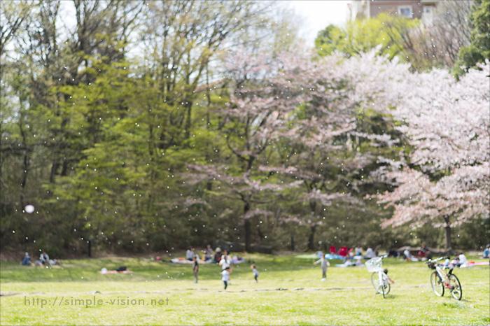 うずまき公園の桜吹雪