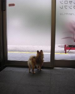 看板犬のランカちゃん