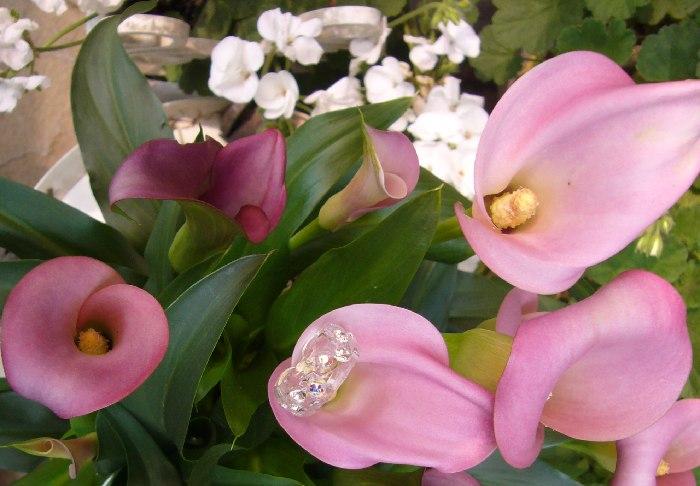 花とアラカ