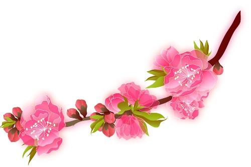 イラスト ひな祭り 桃の花 イラスト : ... の 桃 の 花 今日は ひな祭り